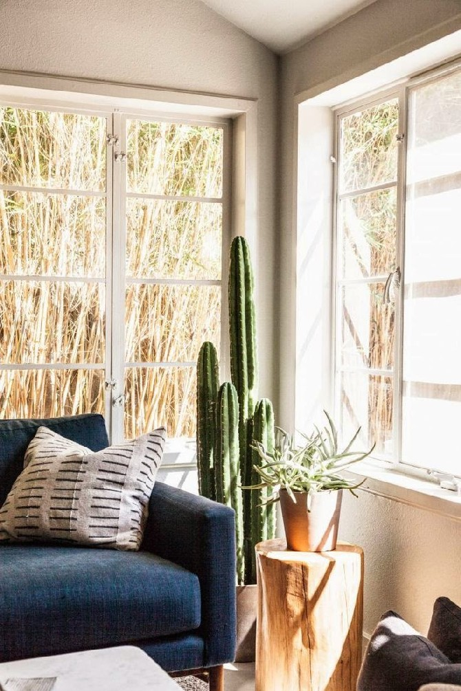 Summer Trends and Ideas for Living Rooms cactus summer trends Summer Trends and Ideas for Living Rooms Summer Trends and Ideas for Living Rooms cactus