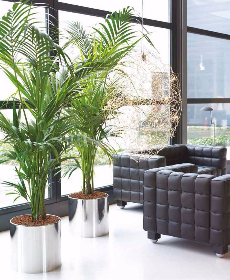 Living room ideas with fresh plants - Living room plant ideas ...