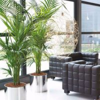 Living Room Ideas With Fresh Plants