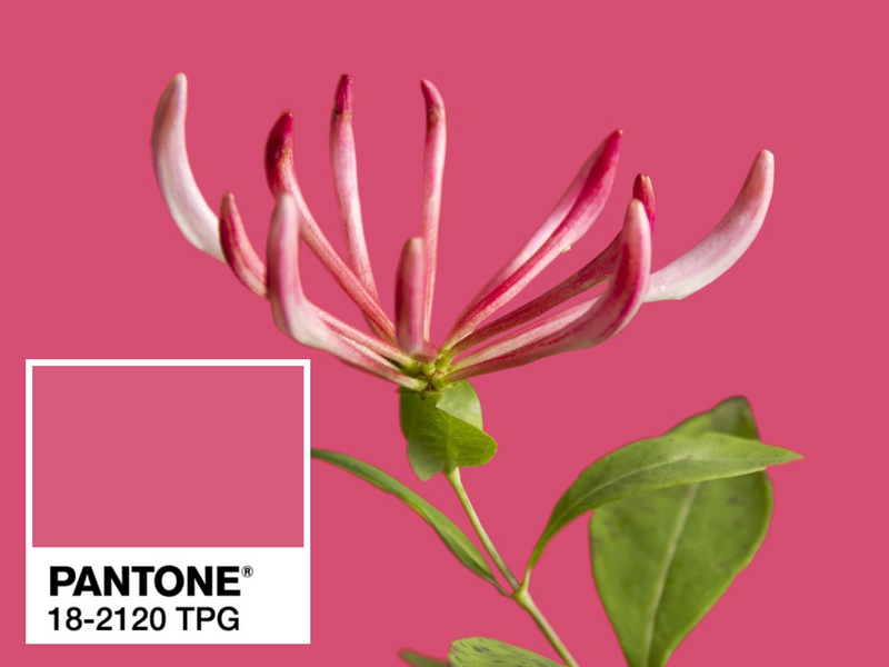 Are You Ready for Pantone Color of the Year 2018? Here's a Recap! pantone color of the year 2018 Are You Ready for Pantone Color of the Year 2018? Here's a Recap! Pantone Color of the Year a Quick Recap Before the Big Announcement 7