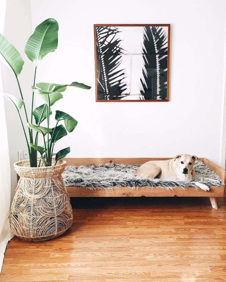 Living Room Kid Friendly Pet Combines Style And Function